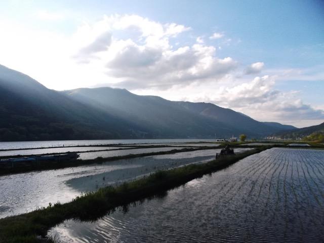 水田と山の影